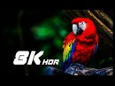 LG 8K 60fps HDR NATURE 8k video ultra hd for 8k tv