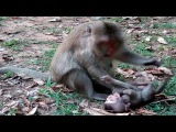 Mother Monkey Why Hit Baby Cry A186