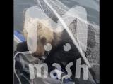 В Карелии рыбаки сачком вытащили из реки тонущего медвежонка
