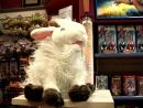 Поющая овечка