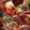 Морепродукты с Дальнего Востока в С-Пб