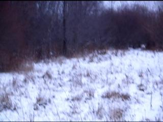 Мой заяц в бегах