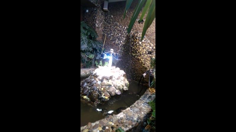 в саду живых бабочек Миндо
