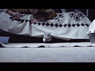Дабстеп-Котики