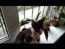 Как защитить комнатные растения от кошек
