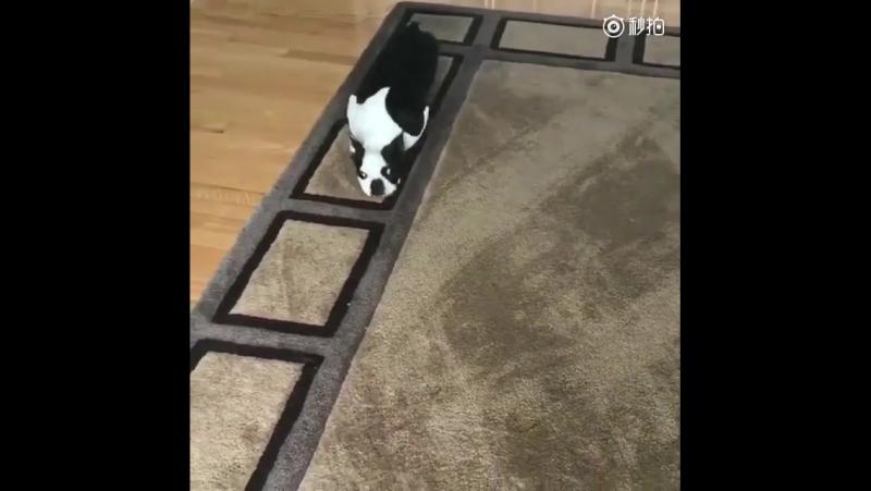 Когда владелец купил новый ковер собака дома была счастлива смотреть онлайн без регистрации