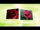 Проект -Ох уж , эти розы...Букет из белых роз.В.Карлаш.Черкассы.2017.