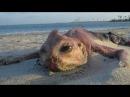 12 Морских Монстров Выброшенных На Берег