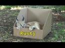 Большие кошки и коробки