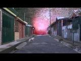Sony Bravia 4K  Petals volcano  Pubdujour.ma