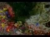 Amon Tobin - Slowly