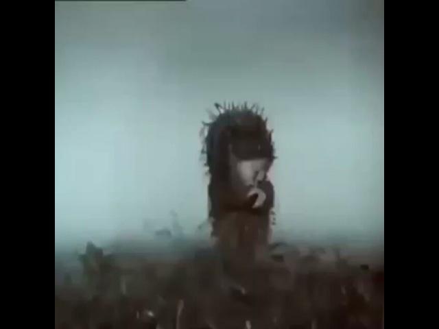 Son_t11 video