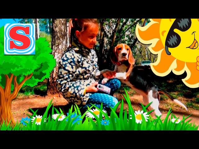 ЩЕНОК БИГЛЬ Соня и Бэтти ВПЕРВЫЕ на прогулке Смешные Животные Для Детей Fun Puppy Dog F...