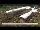 Омск: черные лесорубы вышли на тропу войны