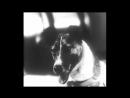 Aiwass - Trumpet Laika ( Remix )