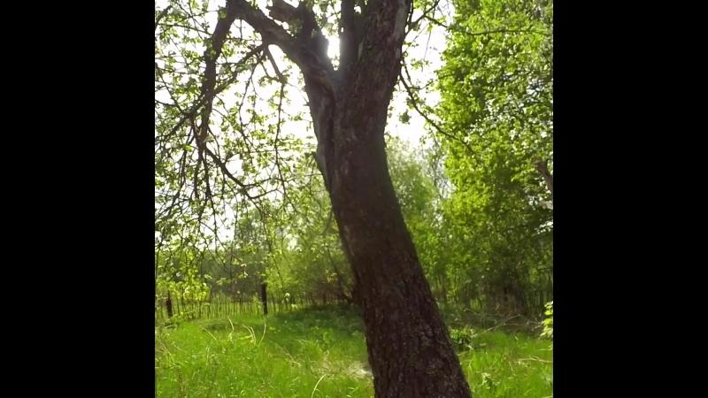 Timelapse: яблоневый сад