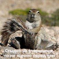 Карина Павлик, 19 августа , Ужгород, id33291342