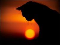 Kate Black cat, 8 марта , Москва, id126918853