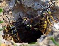 Waspers Womb, 28 ноября , Самара, id42277894