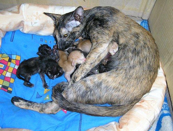 Как принять роды у кошки в домашних условиях как правильно