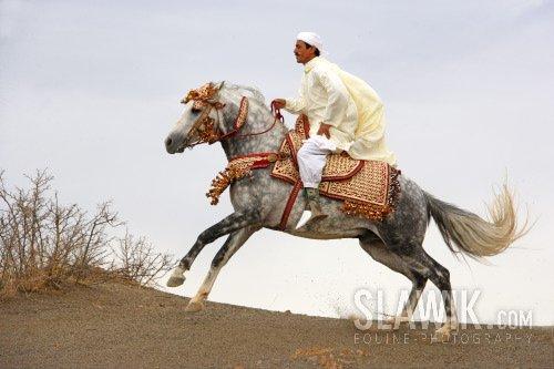 http://cs699.vkontakte.ru/u5437960/52307611/x_122669fa.jpg