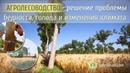 Агролесоводство решение проблемы бедности голода и изменения климата