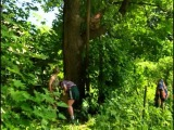 33 квадратных метра: Про корт и маракуйю (1 сезон) ОСП
