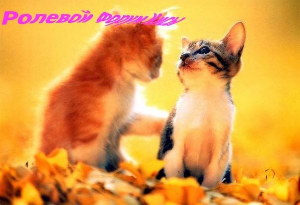 http://cs705.vkontakte.ru/u69072620/117043364/x_58a0f808.jpg