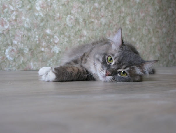 Металічний котик Мейсон
