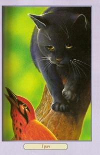 Коты-воители.Все книги.