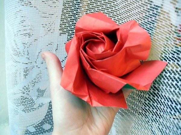 Роза Кавасаки. Сделала по