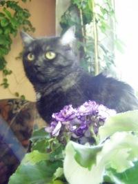 Олси Киса, 9 июня , Москва, id36504256