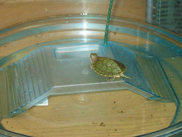 Мостик для красноухой черепахи своими руками видео