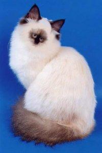 Кошка Еблом, 2 октября , Москва, id44726935