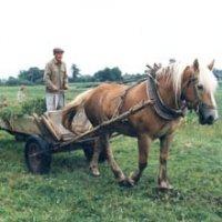 Четвертый Фермер, 5 января , Омск, id38069769