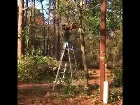 как правильно пилить деревья ГАЙД
