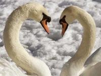 Эта фотография находится также в рубрике: гнезда птиц фото и самые...