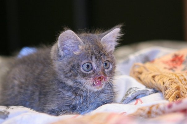 В мурманске открыли памятник коту семёну, который прошел.