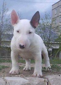 rhfcbdjt ajnj cjfr fcrb, вольер для собак.