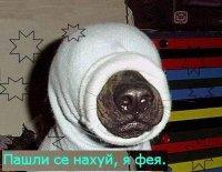 Артур Пирогов, 4 ноября , Екатеринбург, id40366630