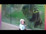 Дети в зоопарке-Забавно)