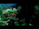 Подводная братва😀