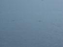 дельфины 24022018