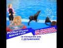 КОНКУРС Розыгрыш 10 билетов на шоу с дельфинами)