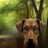 Гуманные люди, или Жизнь без убийства животных