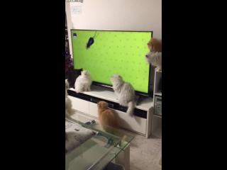 Семейка котиков смотрит телевизор