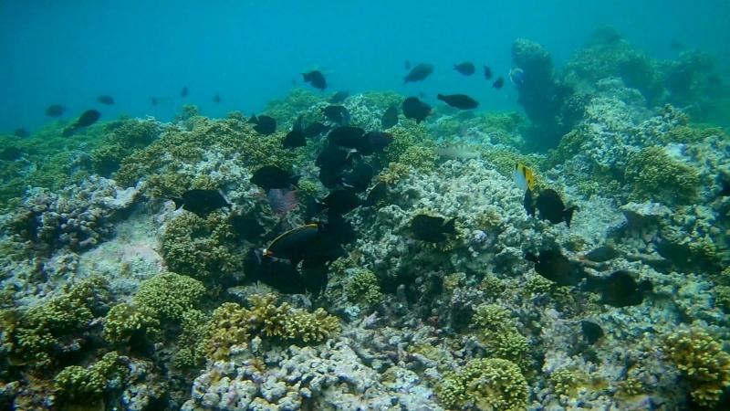 Embudu Village - кромка внешнего рифа FHD0449