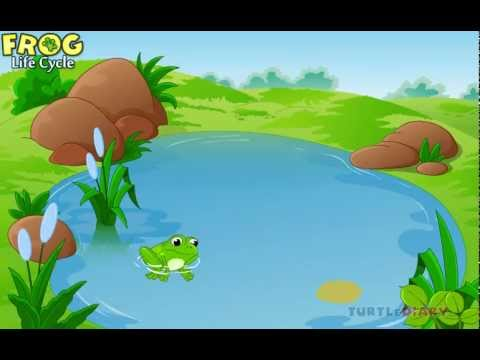 Learn all about a Frog Life Cycle at www.turtlediary.com