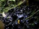 Lokasi Harta Batu Mulia Di Tengah Hutan.mp4