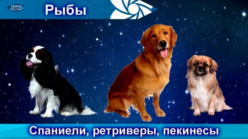 Какая порода собаки для тебя по знаку зодиака؟